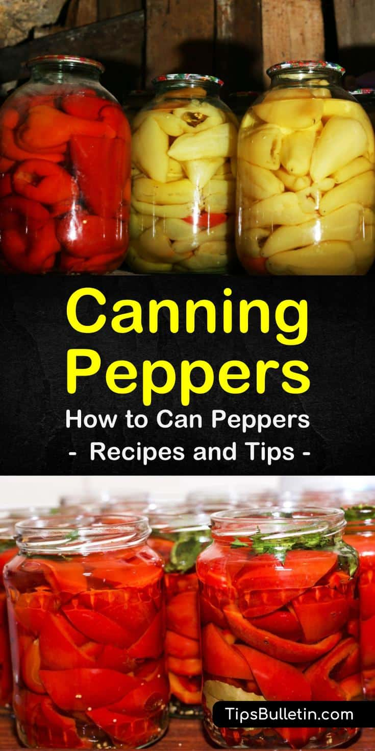 Find out how easy the process of canning peppers is by following this step-by-step guide. Use your canned peppers to make hot sauces or relish or eat your veggies plain. Learn how to use a water bath container to can your freshly-picked peppers. #canning #peppers #spicy