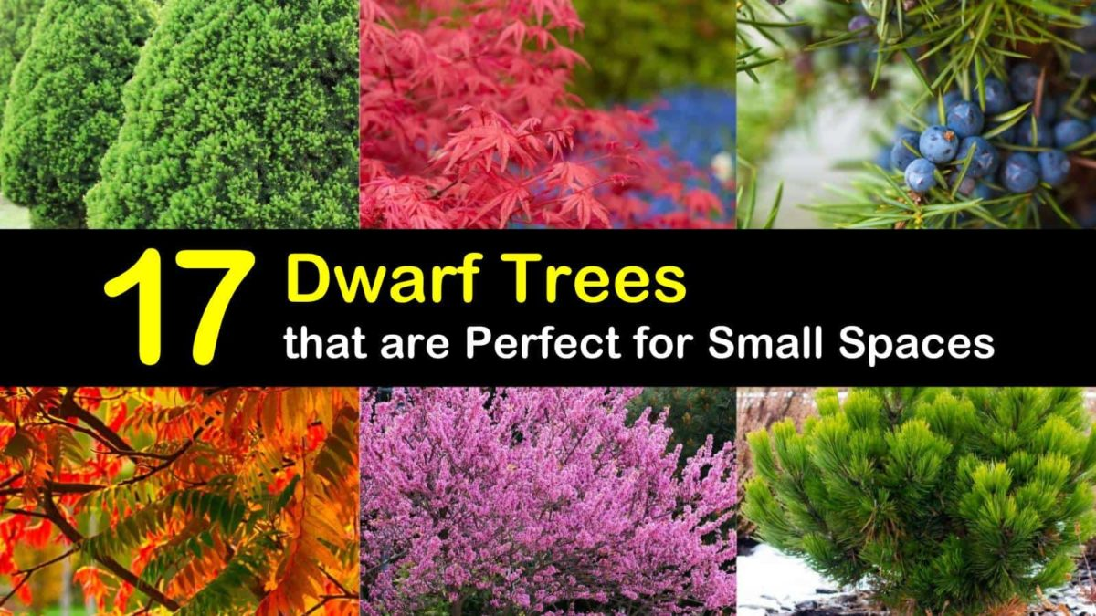 17 Dwarf Trees that are Perfect for Small Spaces