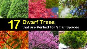 dwarf trees titleimg1