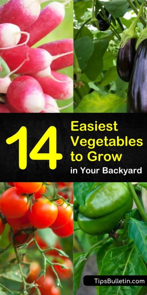 Find the easiest vegetables to grow indoors or in backyards. These garden ideas will show you which veggies grow best in raised beds and which will thrive in containers. Learn how to build your vegetable gardens no matter where you live, or how you choose to grow them. #easiest #vegetables #grow