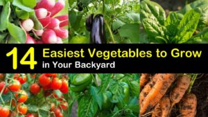 easiest vegetables to grow titleimg1