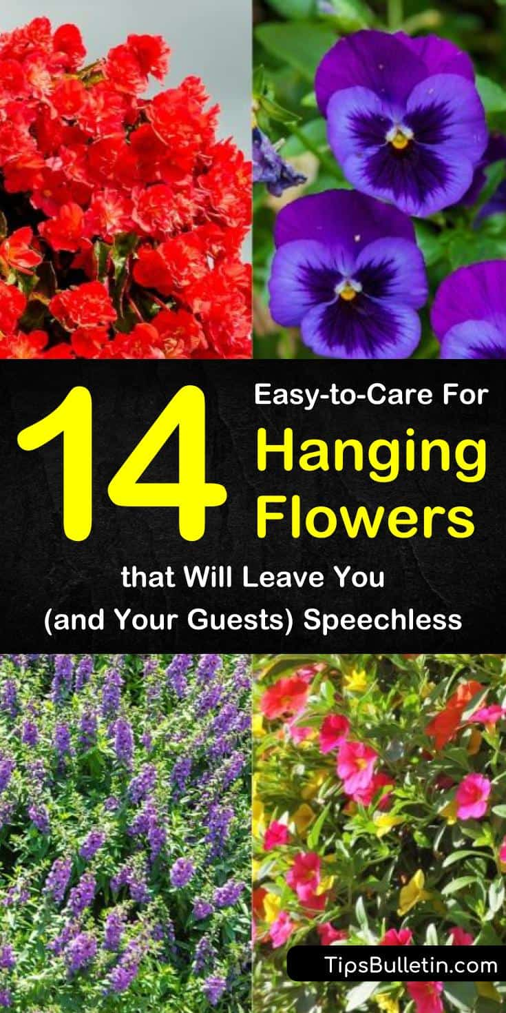 Find out how you can use hanging flowers in your home, whether on your porch or indoors. Discover which hanging baskets make the best backdrops for weddings and DIY decor for outdoor ceremonies. Use these beautiful plants and herbs as wall art or to spruce up a dull room. #hanging #flowers #baskets