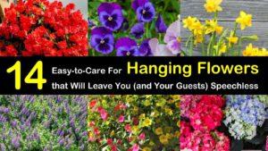 hanging flowers titleimg1