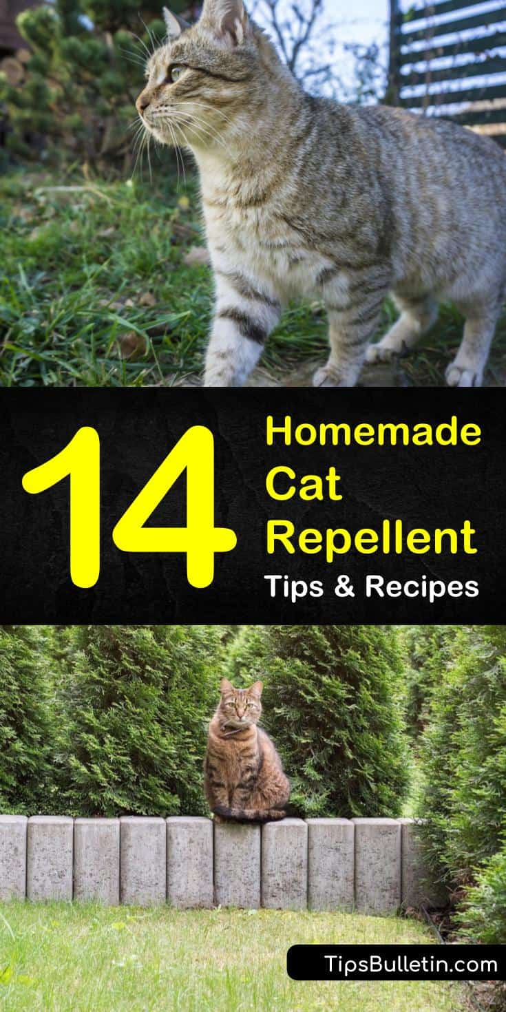 Tired of stray cats treating your garden like a litter box? Learn how to make homemade cat repellent solutions for indoor furniture and outdoor plants. Our guide gives you natural methods so you can spray your troubles away. #cats #repel #pestcontrol