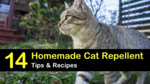 homemade cat repellent titleimg1
