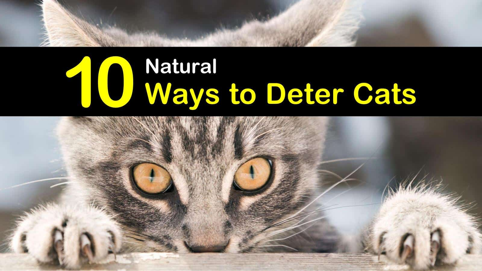 how to deter cats titleimg1