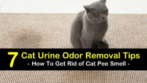 how to get rid of cat pee smell titleimg1