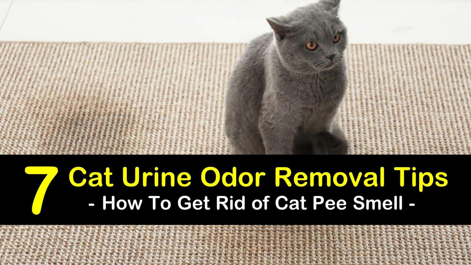 How To Get Rid Of Cat Smell 7 Urine Odor Removal Tips