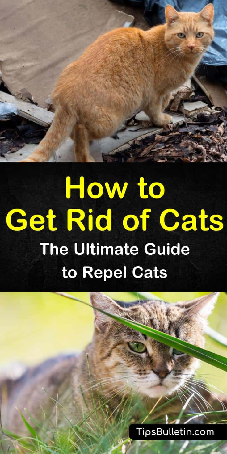 How To Get Rid Of Cats The Ultimate Guide To Repel Cats