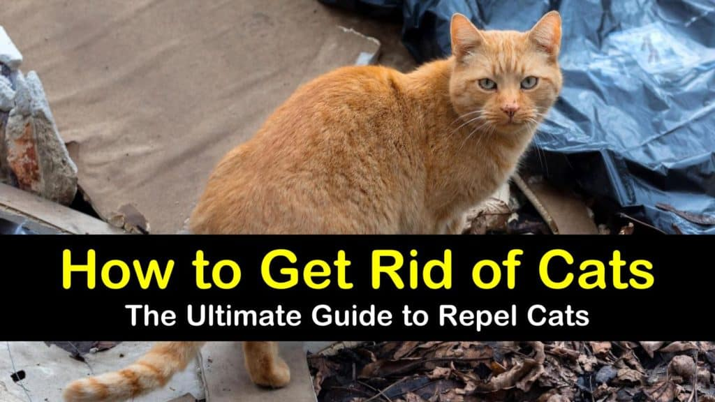 How to Get Rid of Cats - The Ultimate Guide to Repel Cats