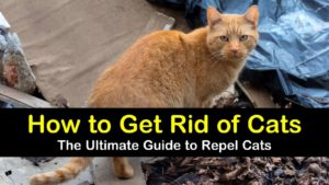 how to get rid of cats titleimg1