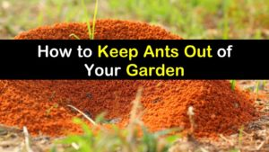 how to keep ants out of garden titleimg1