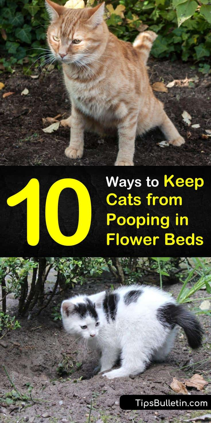 Discover natural ways to keep the neighborhood kitty out of your plants and away from your yard! With these simple solutions, you won't have to worry about strange cats using your flower bed as a litter box ever again! #catrepellent #keepcatsaway