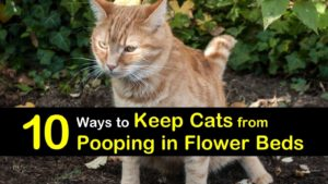 how to keep cats from pooping in flower beds titleimg1