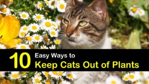 how to keep cats out of plants titleimg1
