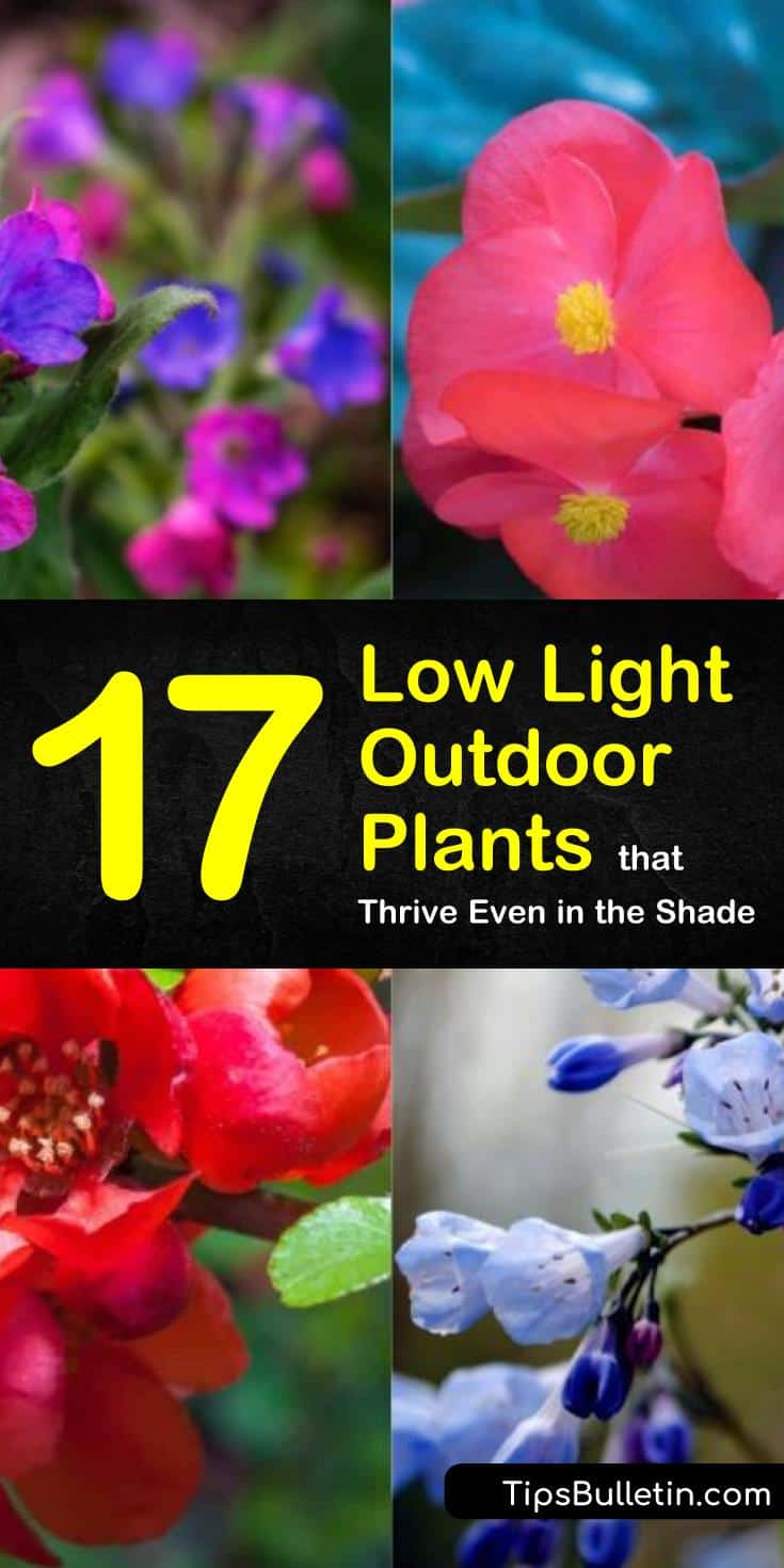 Try these 17 different low light outdoor plants in your garden, including Bluebells and Peace Lily. Learn how to use ornamental grasses, flowers, and ferns for landscaping ideas and curb appeal. Spruce up your front yards and flower beds with these sun shy plants. #lowlight #outdoor #plants #shade