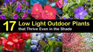 low light outdoor plants titleimg1