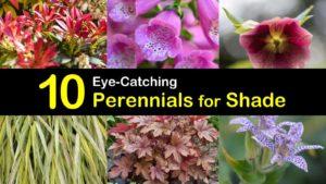 perennials for shade titleimg1
