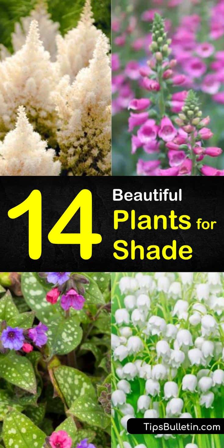 Are you plagued by shaded areas in your landscape? Not sure what you can plant in those spaces? There are so many different perennials you can add to your shaded front yards or backyards to turn that bare spot into an outdoor flowering paradise. #shadeplants #plantsforshade