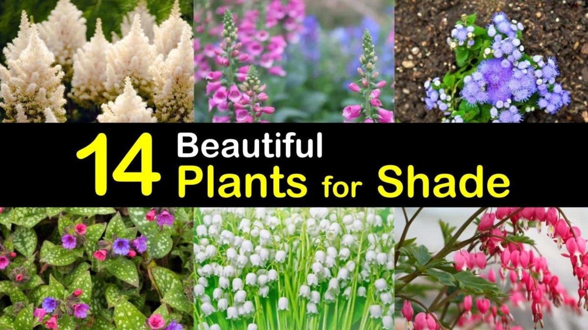 14 Beautiful Plants For Shade