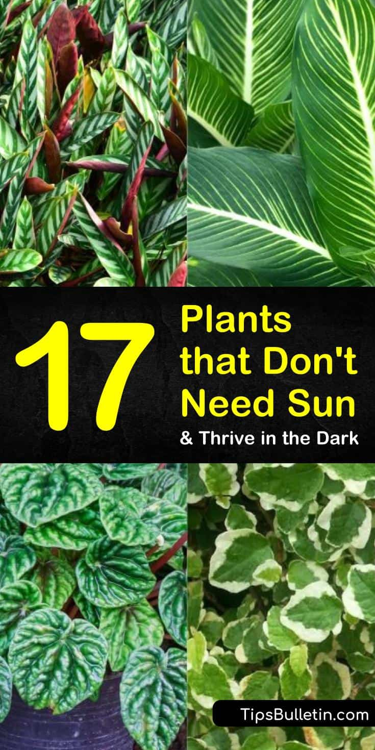 Discover the best plants that don't need sun for indoor planting and for your yards. Our guide shows you the top perennials and other drought tolerant plants for low lights and shades. Find the best flower plants for low sunlight and water. #gardening #lowlightplants