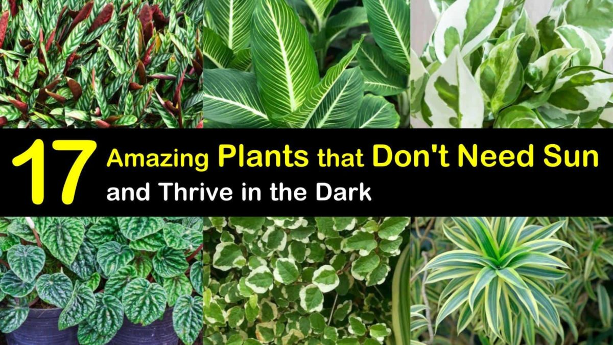 17 Amazing Plants That Don T Need Sun And Thrive In The Dark