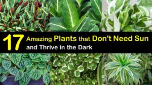 plants that don't need sun titleimg1