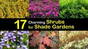 shrubs for shade titleimg1