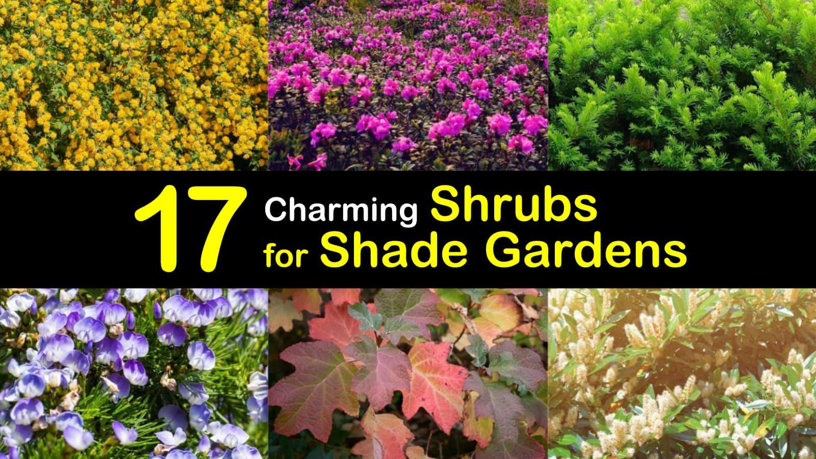 shrubs for shade titleimg1