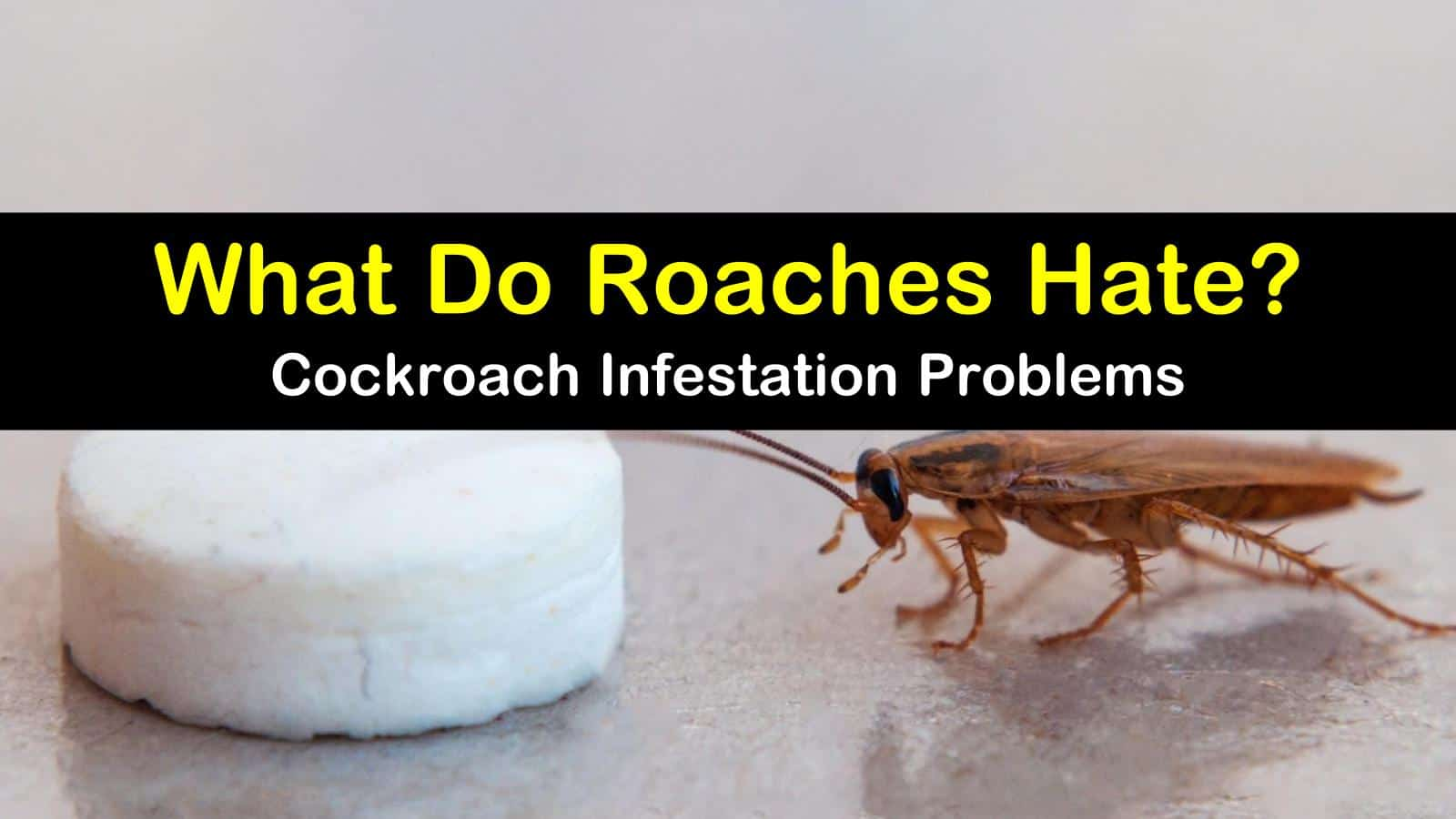 6 Simple Things Roaches Hate