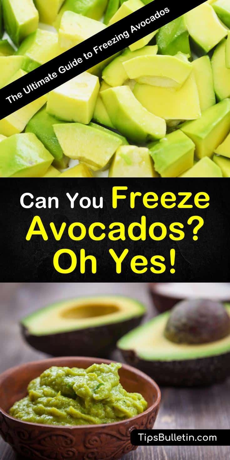 To prolong the enjoyment of avocado season you can begin freezing your avocados for use at a later date. Frozen avocados stay fresh in freezers for up to six months and while you may not eat them plain, they are great to cook with. #freezingavocados #howtofreezeavocados #frozenavocados