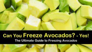 can you freeze avocados titleimg1