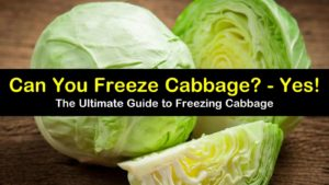 can you freeze cabbage titleimg1