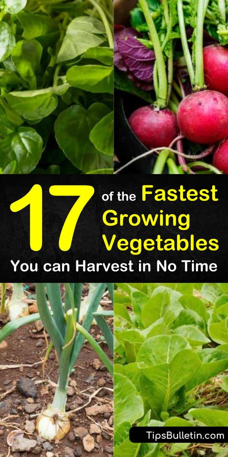 Discover the fastest growing vegetables for your gardens at home with our guide. We show you how to grow veggies from seeds and give you some top-notch organic gardening tips. Your tomato plants and other garden residents will have some new best friends next spring! #fastgrowing #vegetables #garden