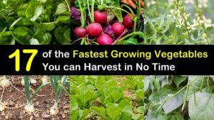 fastest growing vegetables titleimg1