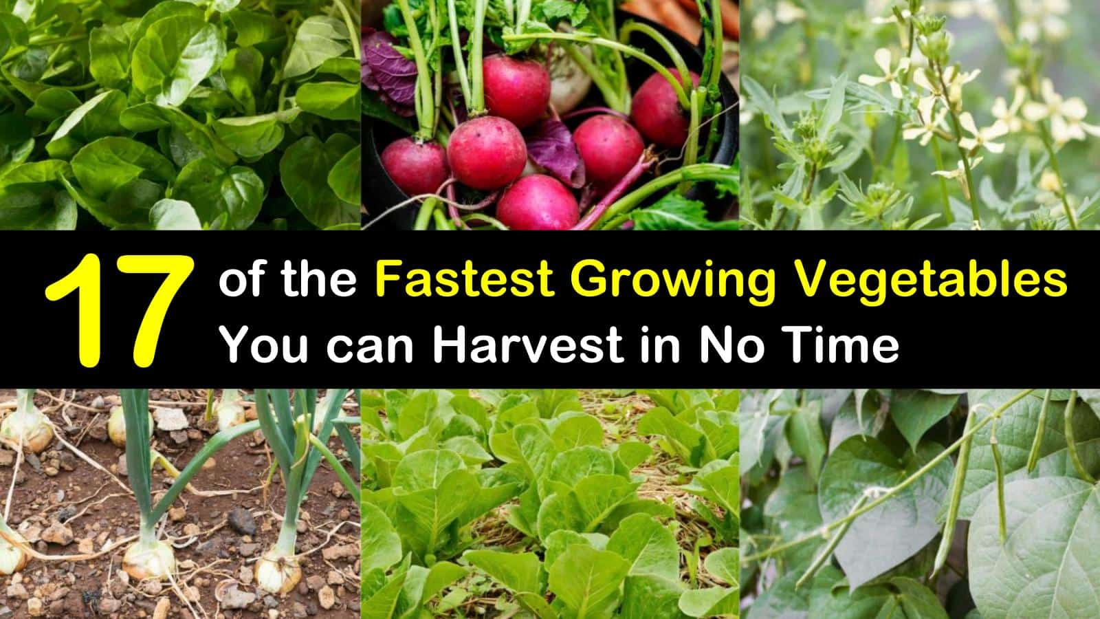 fastest growing vegetables titleimg1