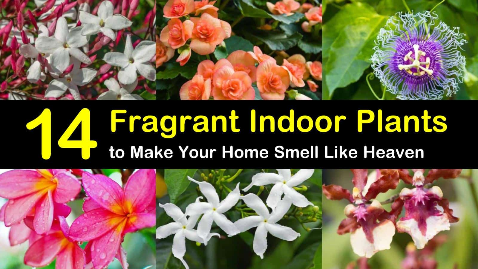 fragrant indoor plants titleimg1