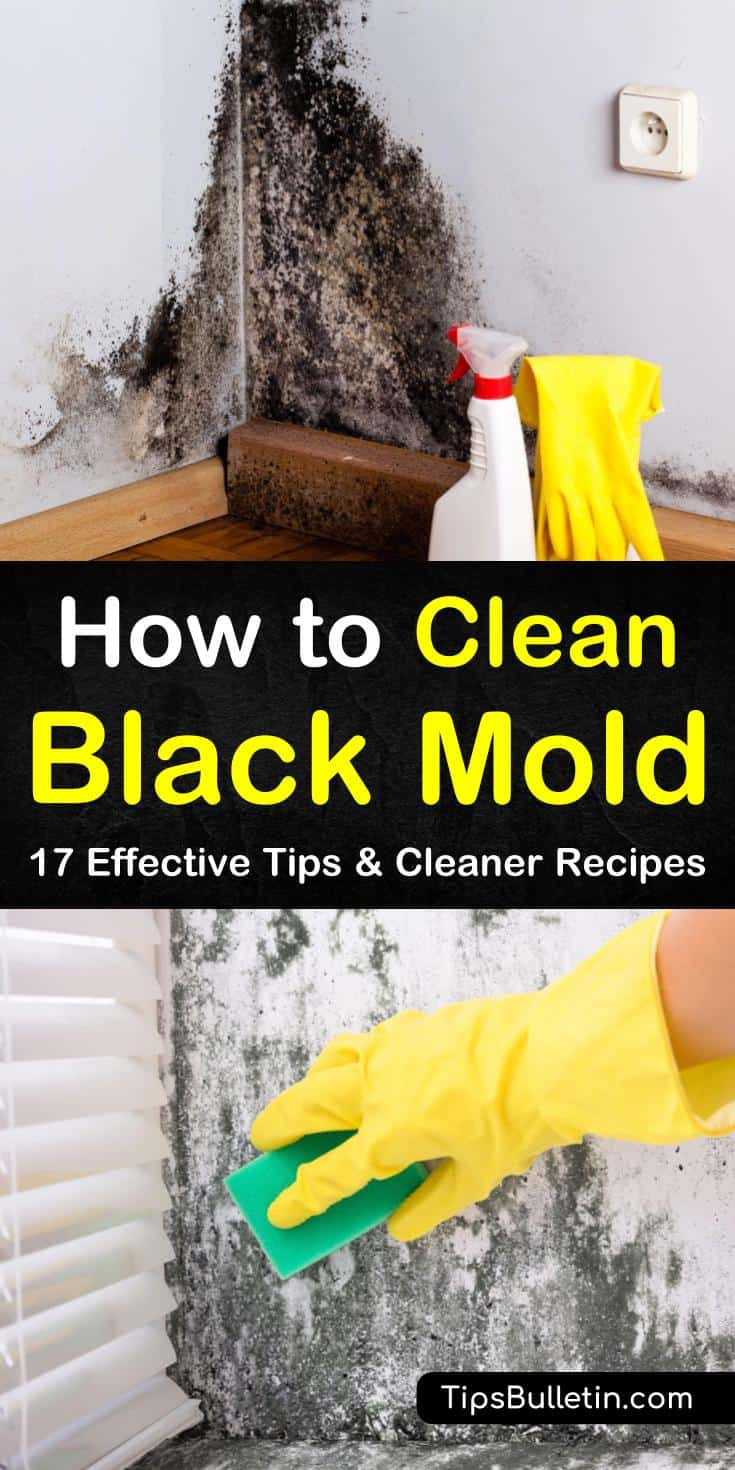 In this guide on how to clean black mold, discover the best methods for mold remediation. Use common cleaning products like hydrogen peroxide and vinegar to blast through black mold. Discover what equipment to keep handy, such as gloves, a respirator, and a spray bottle. #clean #black #mold
