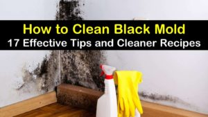 how to clean black mold titleimg1
