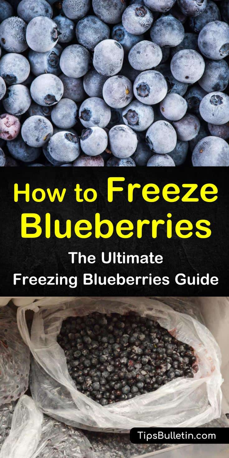 Blueberries have a short growing season and a short shelf life. You can use a variety of jam recipes to use up your excess berries or you can learn how to successfully freeze the fruit to enjoy all year long. #frozen #blueberries #howtofreezeblueberries