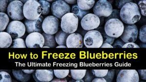 how to freeze blueberries titleimg1
