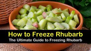 how to freeze rhubarb titleimg1