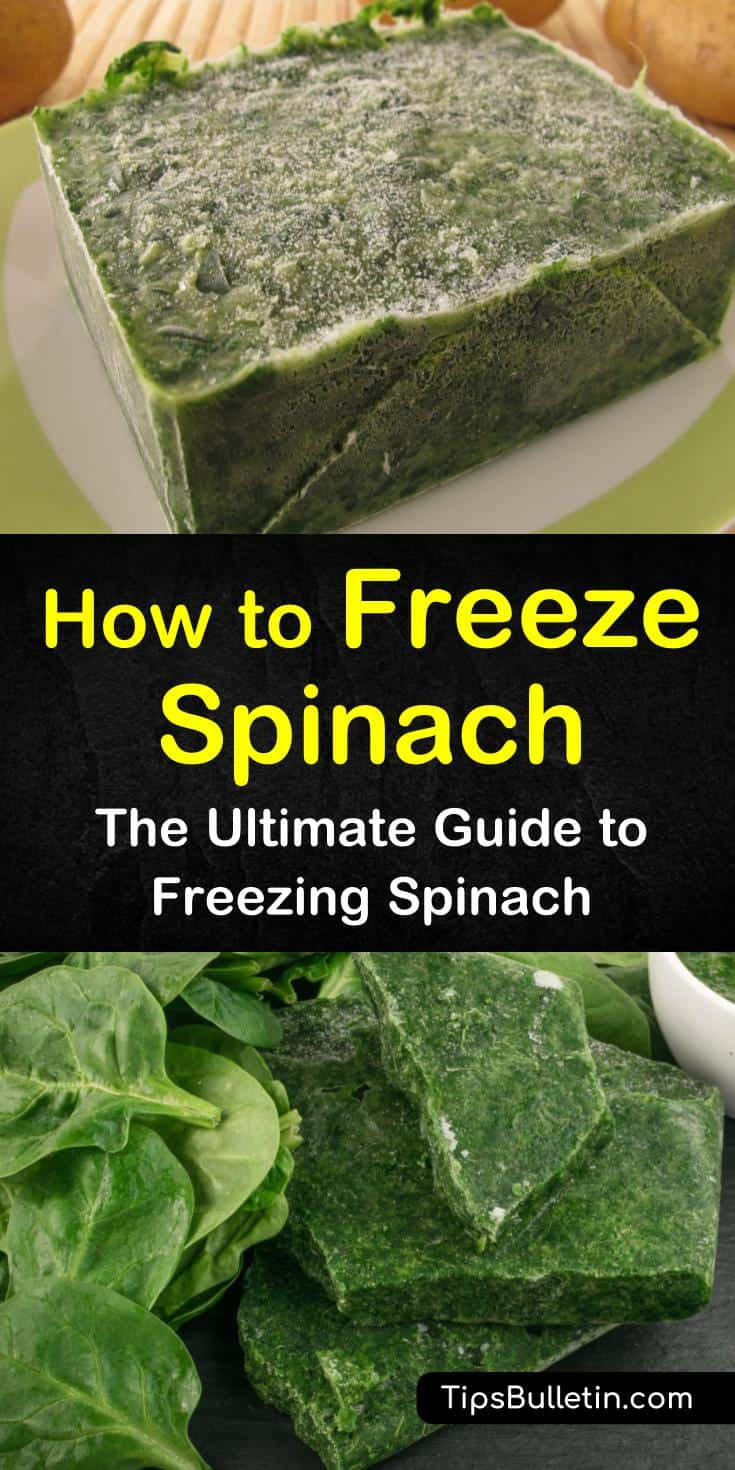 Discover how to freeze spinach in ice cubes for smoothies and healthy breakfast drinks. Pack spinach leaves in freezer bags for cooking casseroles without losing healthy nutrients. Learn how to make a delicious spinach quiche using one of our favorite recipes. #freeze #spinach #howto