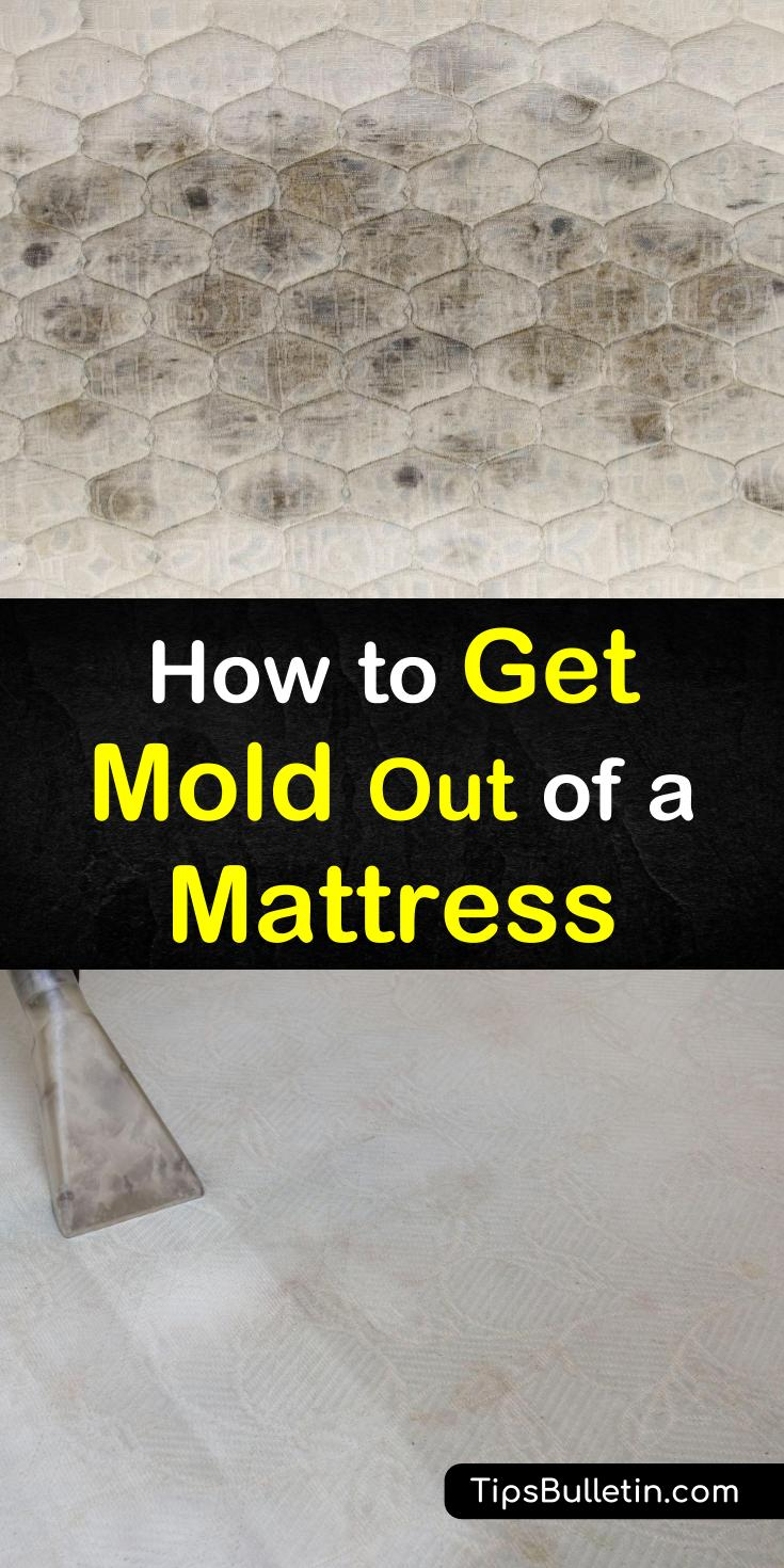 Memory foam mattresses are prone to mold. That mold then attracts dust mites, and it escalates from there. But don't worry, our tips can eradicate that mold for you! #moldymattress #dustmites #moldcleaner