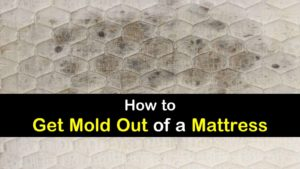 how to get mold out of a mattress titleimg1