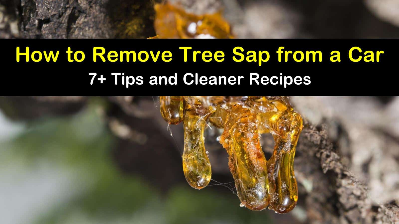 how to remove tree sap from a car titleimg1