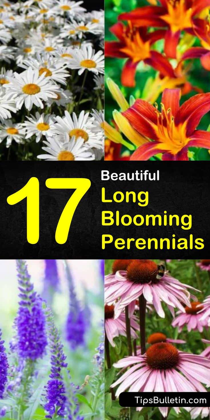 Create some of the most colorful landscapes that provide a variety of colors throughout the various seasons. From purple, pink, and yellow flowers we show you the best perennials flowers and shrubs to use when creating the perfect gardens. #longblooming #perennialsthatlast #perennials
