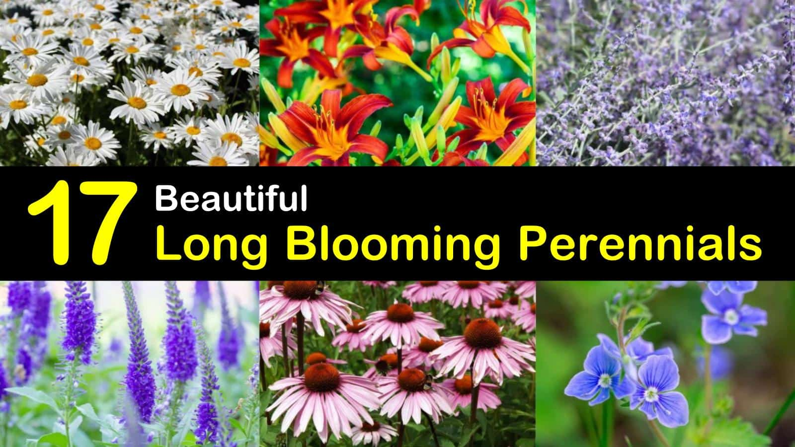 17 Long Blooming Perennials To Extend Color Throughout The Season