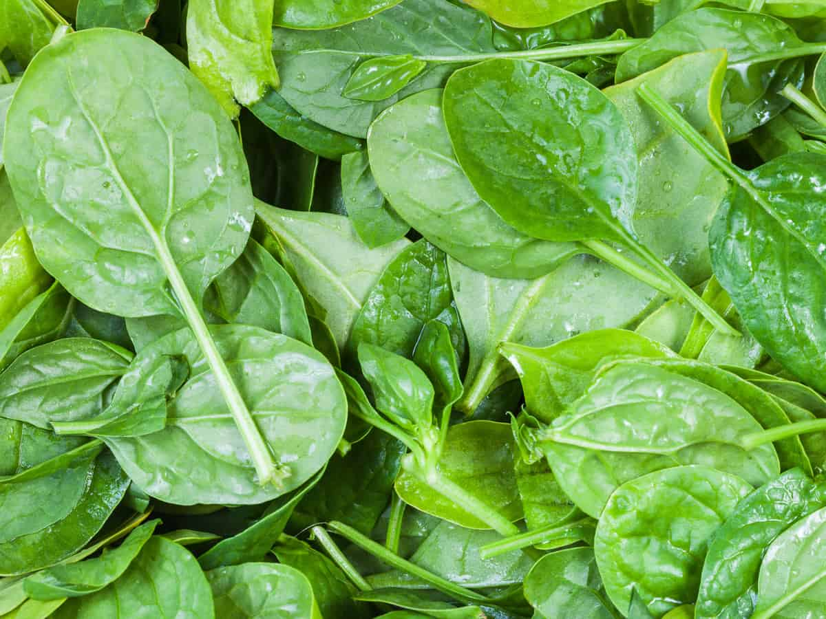 spinach offers tons of health benefits
