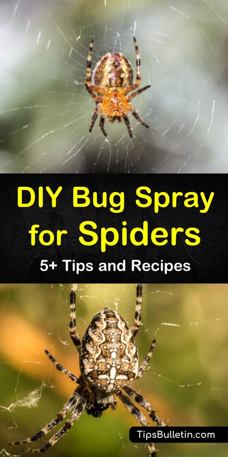 We've got homemade bug sprays for deterring and killing spiders using natural repellents. You don't need to call in pest control when you can use peppermint, tea tree, and other essential oils to repel bugs. #bugspray #spiderspray #homemadebugspray #diyspiderspray